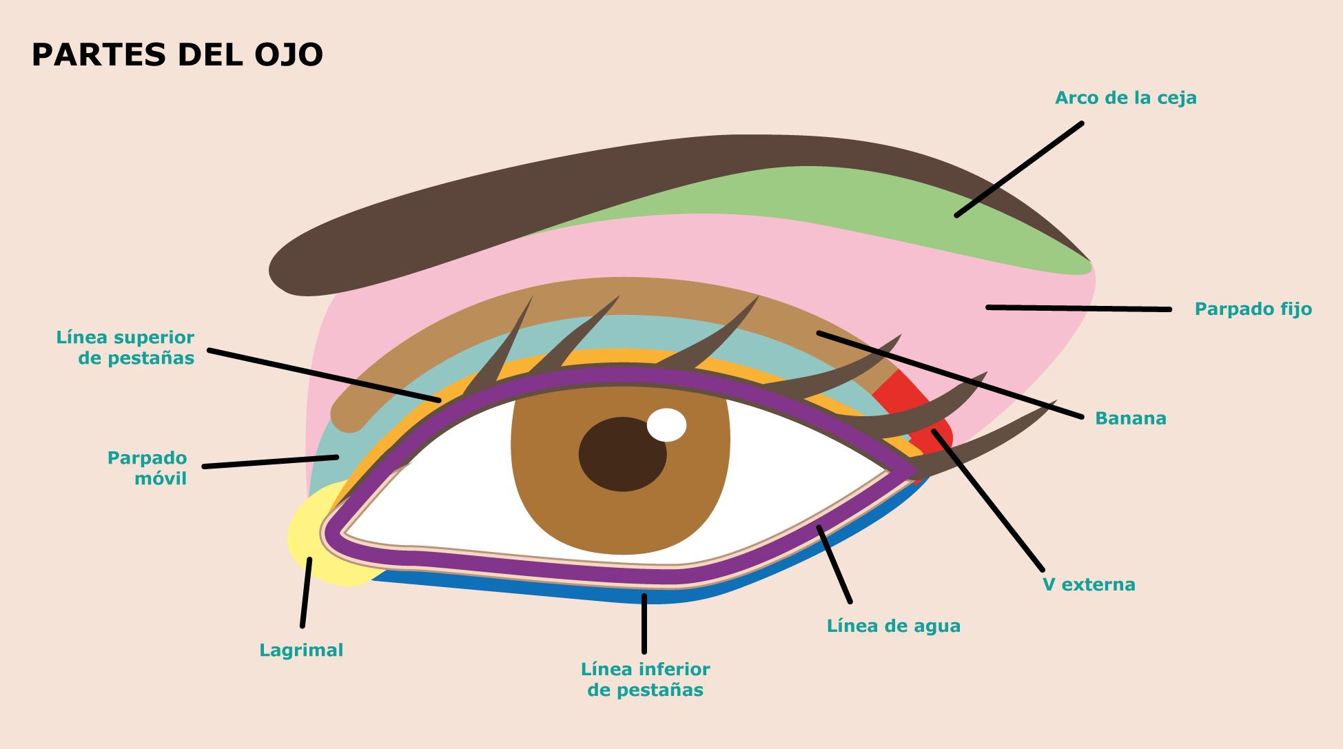 Maquillaje para principiantes: LAS ZONAS DEL OJO (3)